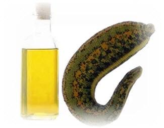 khasiat minyak dari lintah untuk membesarkan alat vital pria